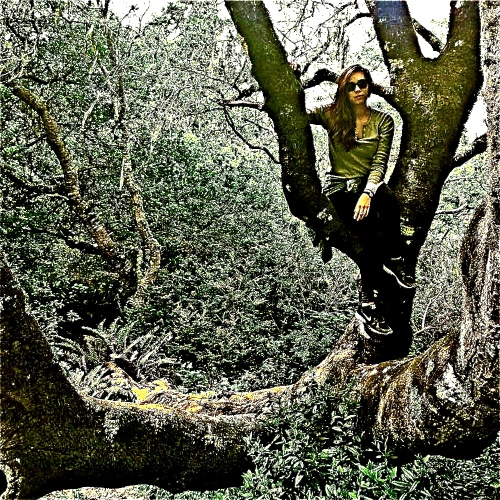 ALLY TREE BIG SUR 14 -1-