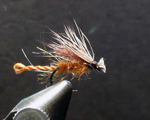 amber-z-underwing-caddis