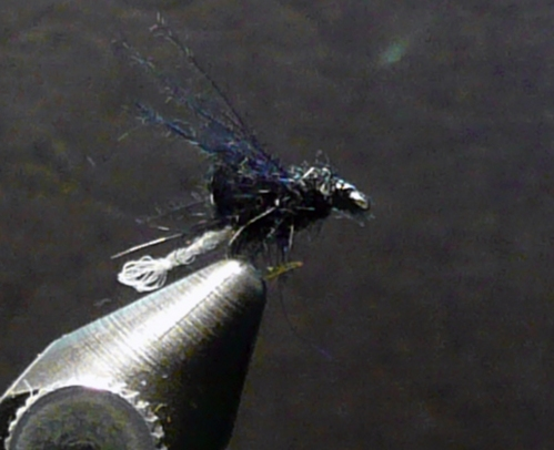 cdc-caddis-blk