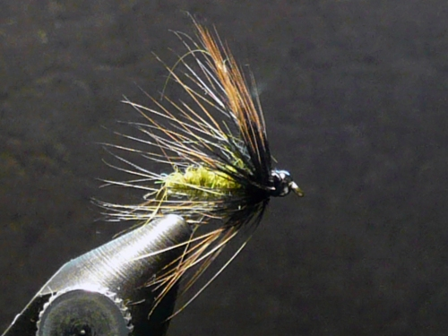 glass-house-caddis