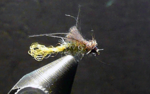 olive-cdc-caddis