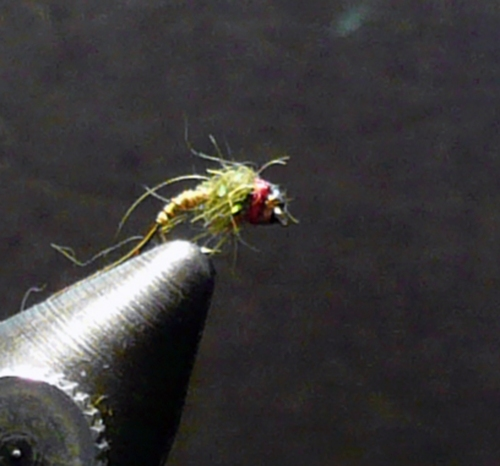 owens-red-thread-nymph-bwo