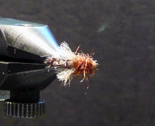 z-caddis-amber-top-view