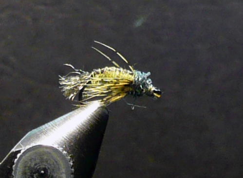 zwing-caddis-olive