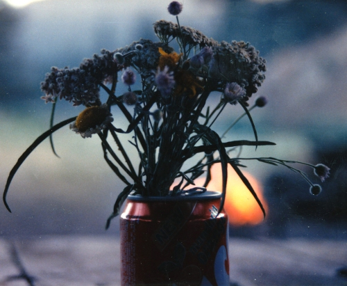 timadd-flowers-87-efc2