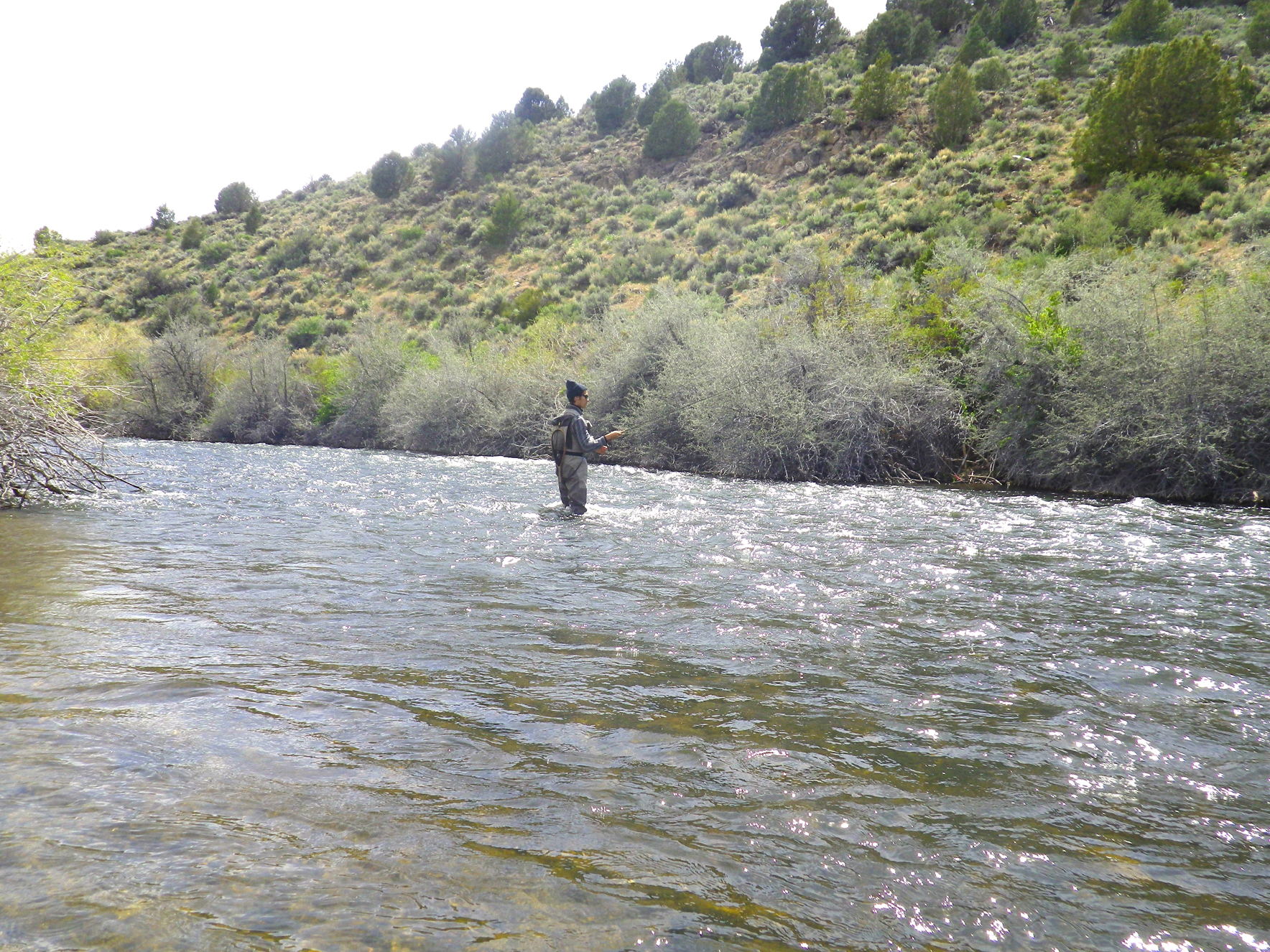 West walker river bridgeport ca planettrout for Walker river fishing