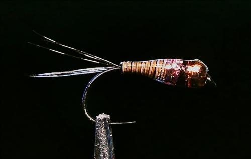 PINK SPOT NYMPH -1-