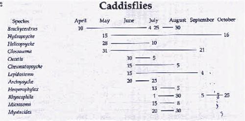 CADDIS CHART YNP -1-
