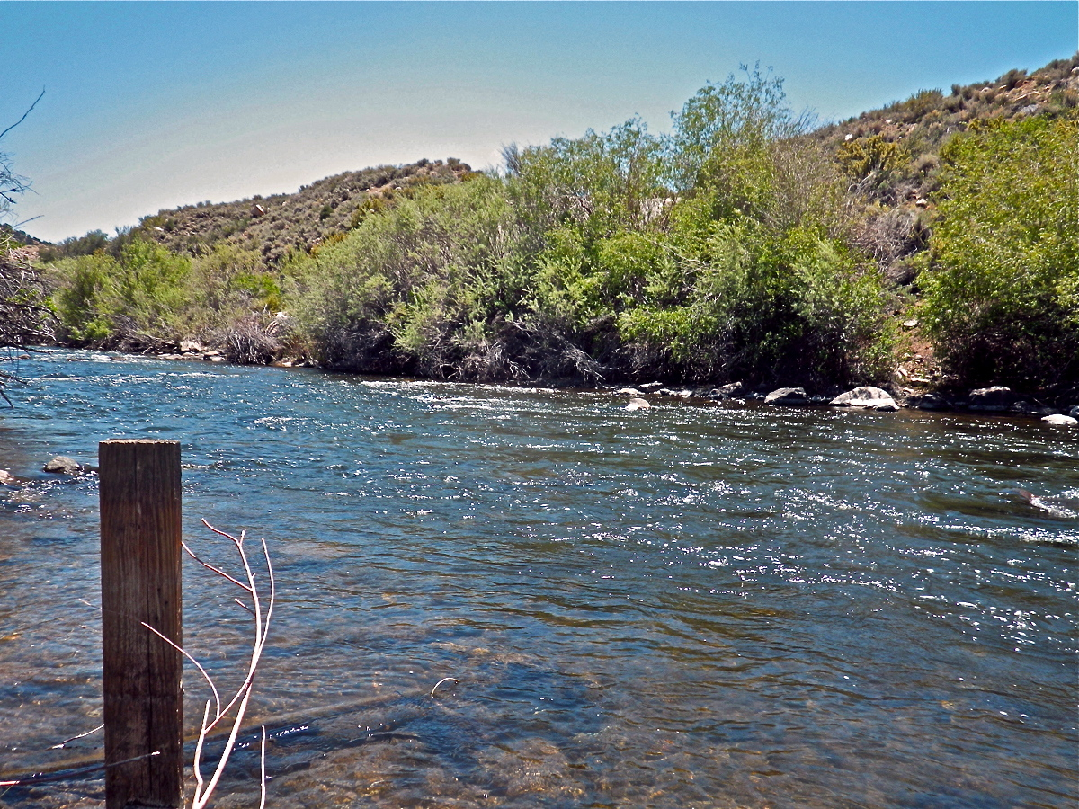 Planettrout my fly fishing tying story over 42 years for Walker river fishing