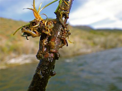 bugs-ewr5-2011-6-_1