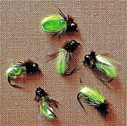 GAS CADDIS -2-