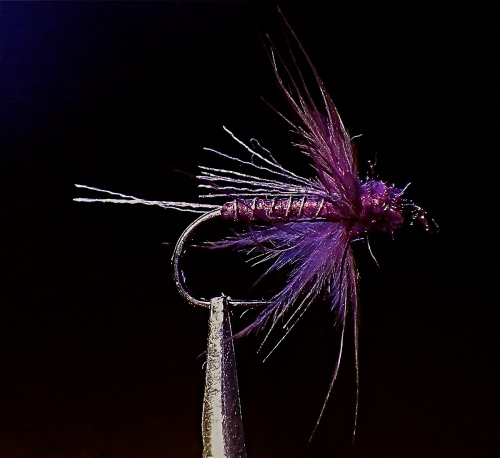 HAZED HOLO SH EMERGER -1-