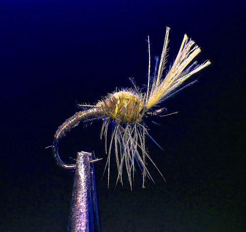 DIRTY SPIDER MIDGE OL VAR