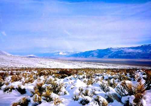 OWENS VALLEY WINTER MIDGES