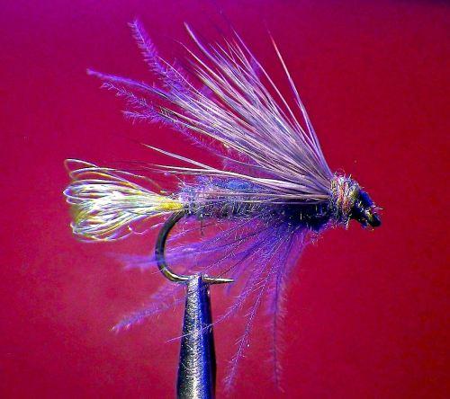 UV2 DK BLUE SEDGE