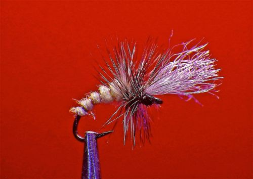 PARA MIDGE EMERGER CREAM