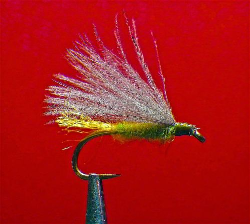 THE PUPIL - BLACK CADDIS