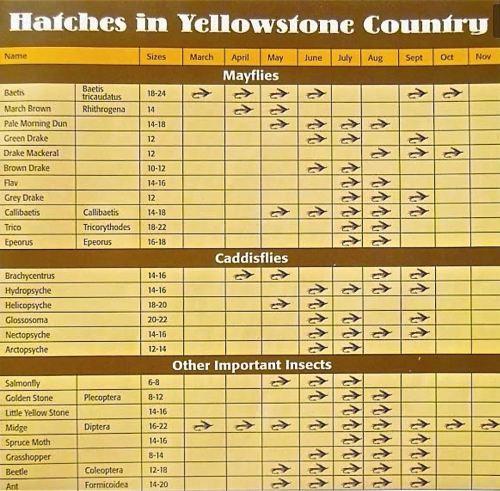 YNP HATCH CHART