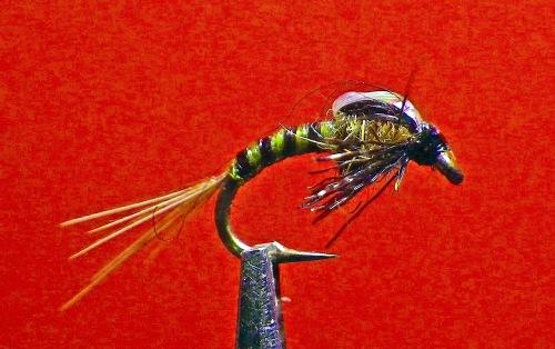 firefly-dk-olive-baetis-1