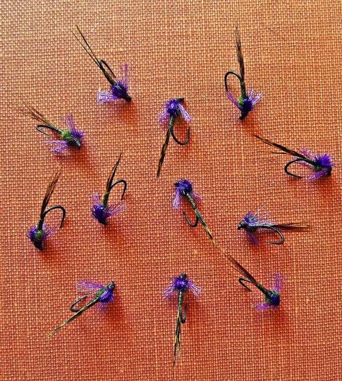 purple-svelte-baetis-grp