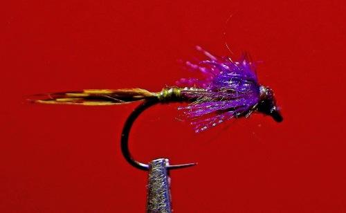 purpleolive-quill-svelte-baetis