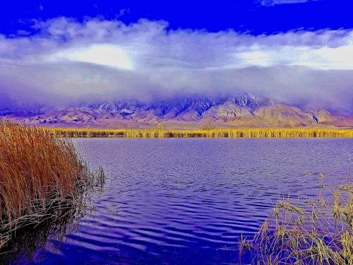 3-goose-lake-moo